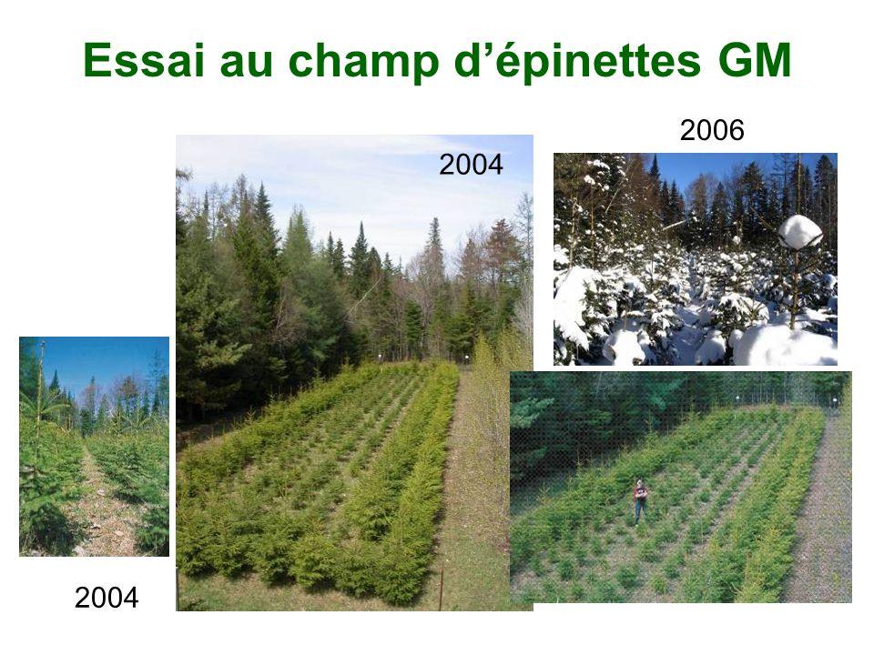 Essai au champ dépinettes GM 2006 2004