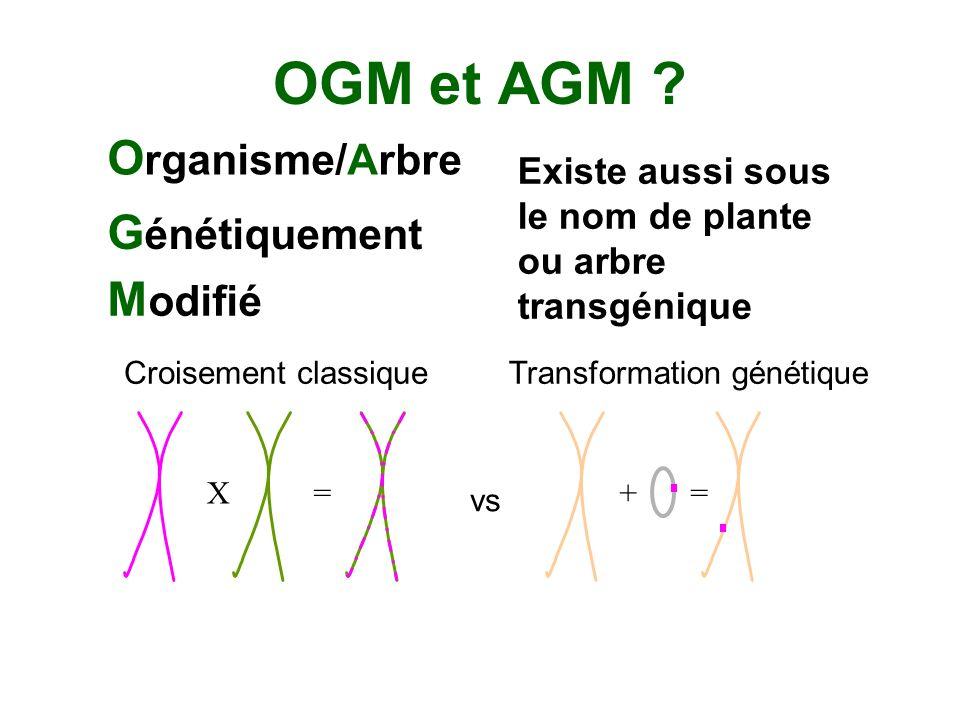 OGM et AGM ? O rganisme/Arbre G énétiquement M odifié Existe aussi sous le nom de plante ou arbre transgénique X=+= vs Croisement classiqueTransformat