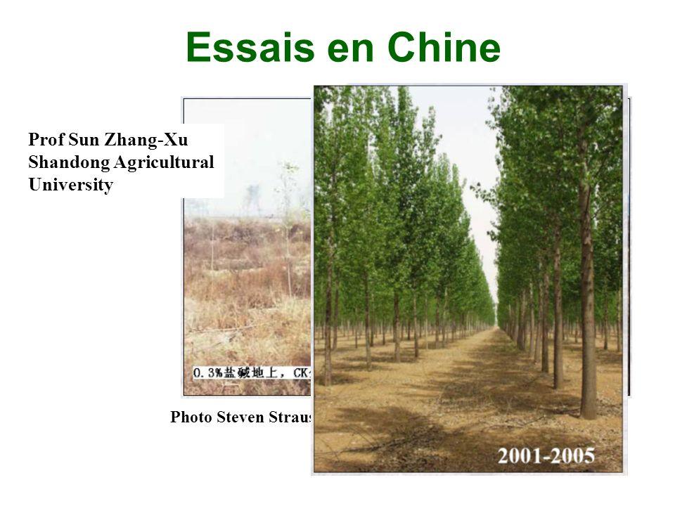Essais en Chine Prof Sun Zhang-Xu Shandong Agricultural University Photo Steven Strauss