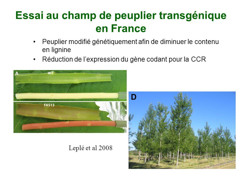 Essai au champ de peuplier transgénique en France Peuplier modifié génétiquement afin de diminuer le contenu en lignine Réduction de lexpression du gè
