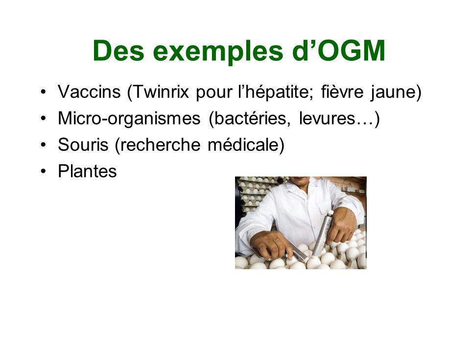 Des exemples dOGM Vaccins (Twinrix pour lhépatite; fièvre jaune) Micro-organismes (bactéries, levures…) Souris (recherche médicale) Plantes
