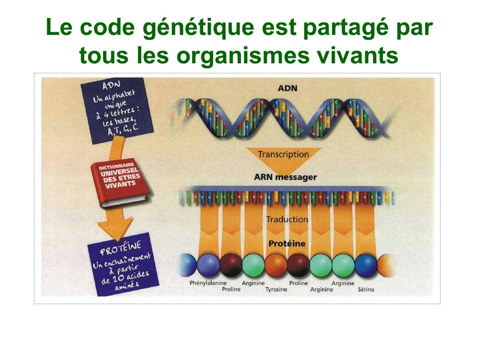 Le code génétique est partagé par tous les organismes vivants