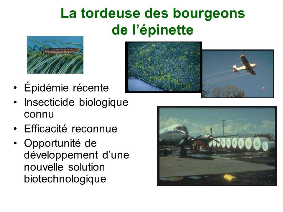 La tordeuse des bourgeons de lépinette Épidémie récente Insecticide biologique connu Efficacité reconnue Opportunité de développement dune nouvelle so