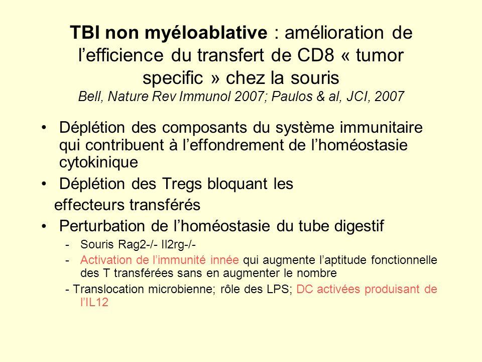 TBI non myéloablative : amélioration de lefficience du transfert de CD8 « tumor specific » chez la souris Bell, Nature Rev Immunol 2007; Paulos & al,