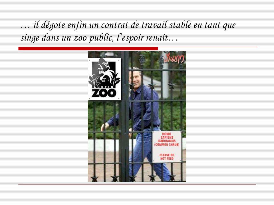 … il dégote enfin un contrat de travail stable en tant que singe dans un zoo public, lespoir renaît…