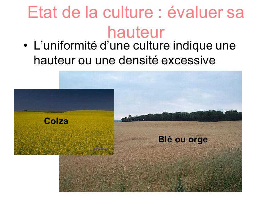 Etat de la culture : évaluer sa hauteur Luniformité dune culture indique une hauteur ou une densité excessive Colza Blé ou orge