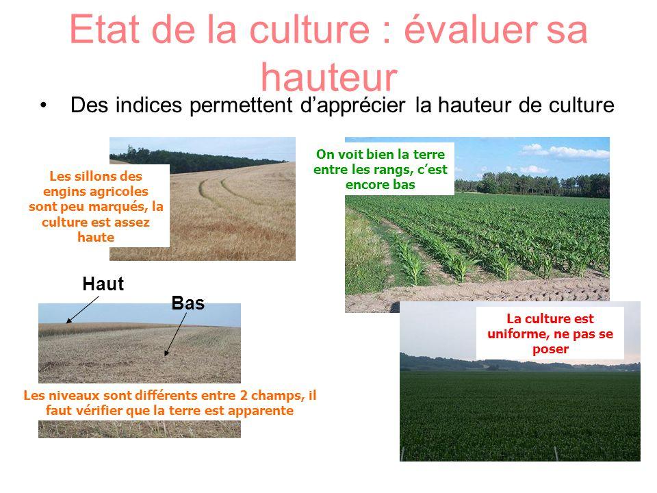 Etat de la culture : évaluer sa hauteur Des indices permettent dapprécier la hauteur de culture On voit bien la terre entre les rangs, cest encore bas