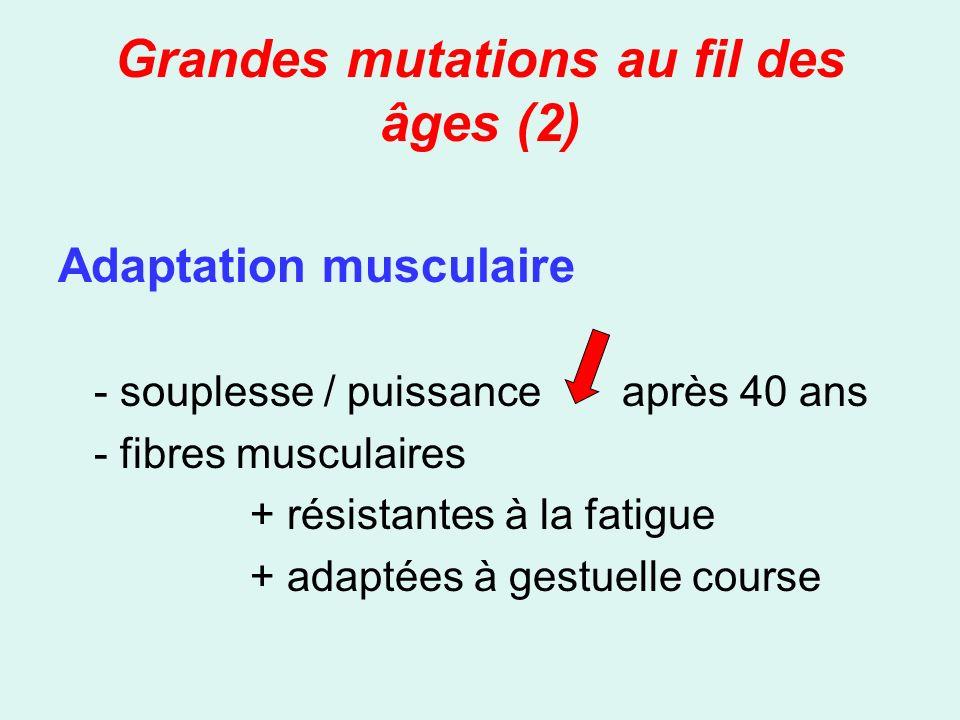 Grandes mutations au fil des âges (2) Adaptation musculaire - souplesse / puissance après 40 ans - fibres musculaires + résistantes à la fatigue + ada
