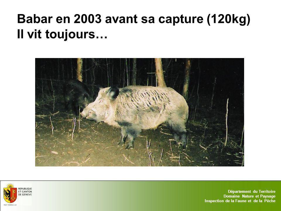 17.05.2014 - Page 11 Département du Territoire Domaine Nature et Paysage Inspection de la Faune et de la Pêche Babar en 2003 avant sa capture (120kg)