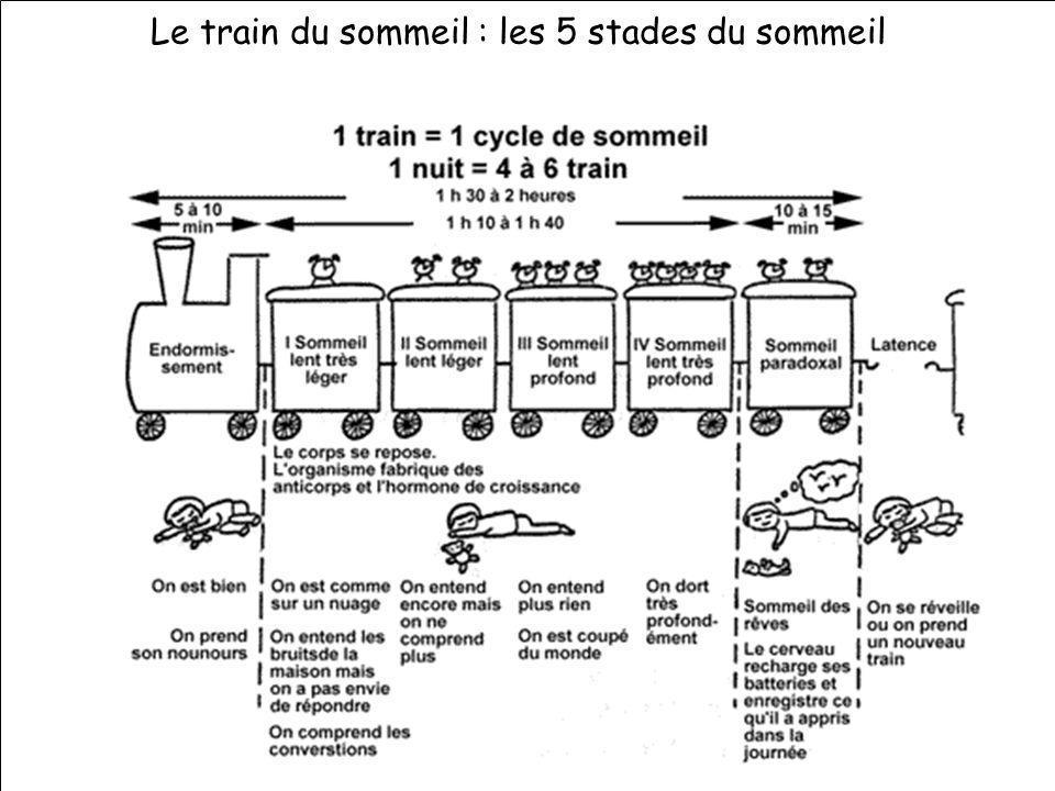 information sur les rythmes - vendredi 19 novembre 2004 Formation des nouveaux directeurs - IUFM site dOrléans-St Jean Le train du sommeil : les 5 sta