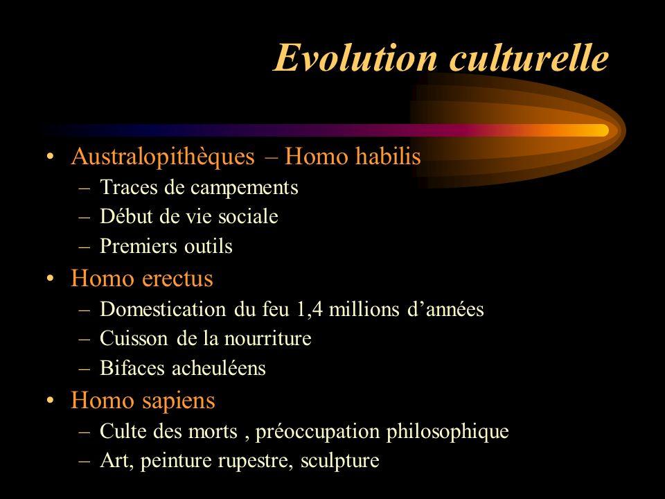 Evolution culturelle Australopithèques – Homo habilis –Traces de campements –Début de vie sociale –Premiers outils Homo erectus –Domestication du feu