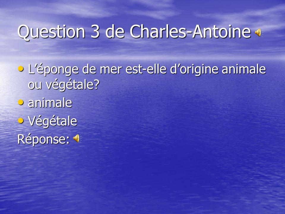 Question 3 de Charles-Antoine Léponge de mer est-elle dorigine animale ou végétale.