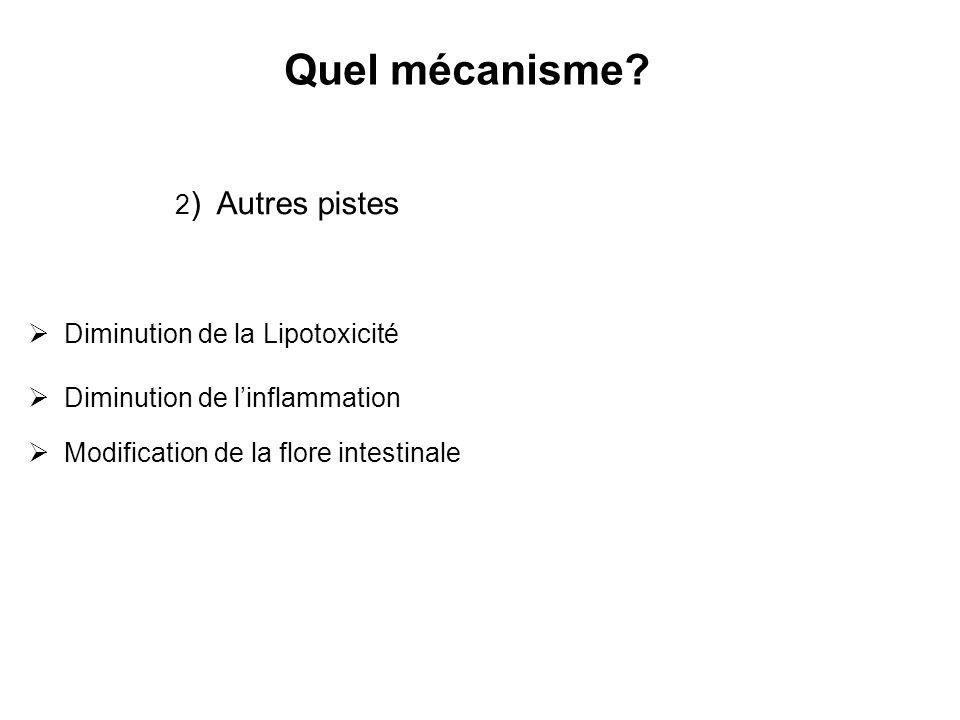 Quel mécanisme? 2 ) Autres pistes Diminution de la Lipotoxicité Diminution de linflammation Modification de la flore intestinale