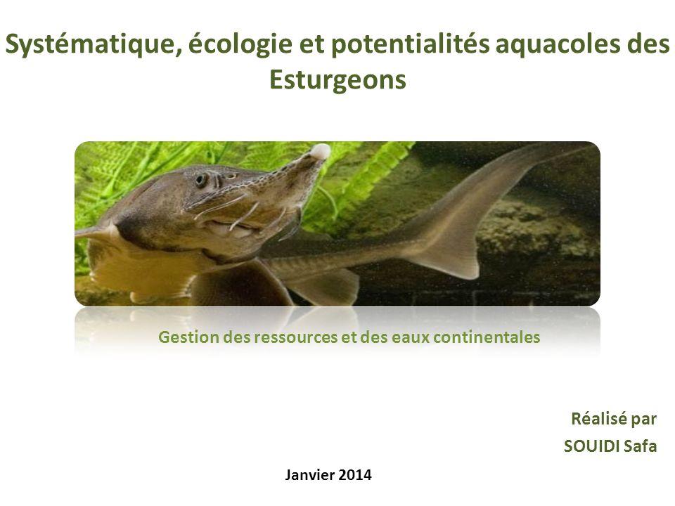 Systématique, écologie et potentialités aquacoles des Esturgeons Réalisé par SOUIDI Safa Janvier 2014 Gestion des ressources et des eaux continentales