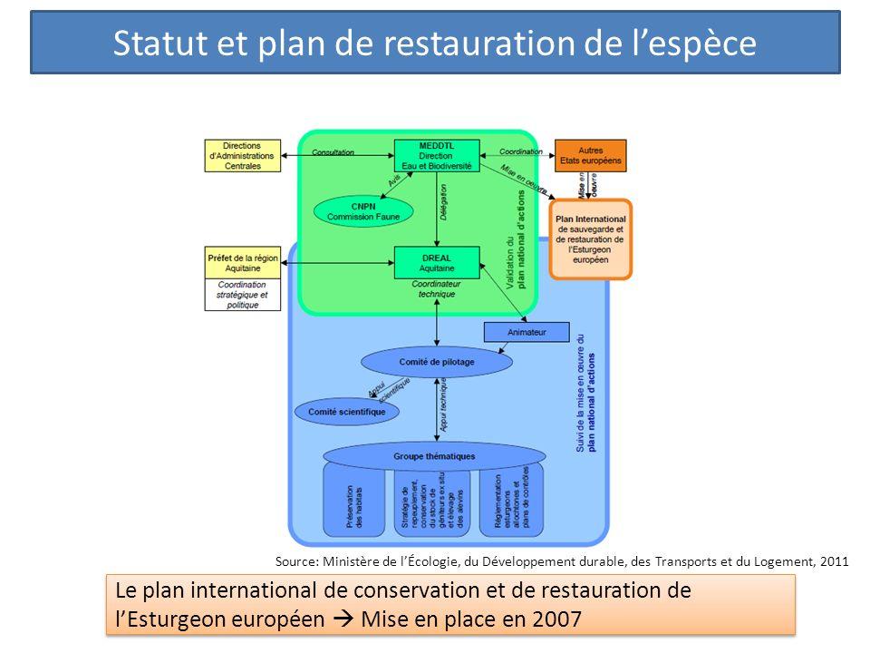 Statut et plan de restauration de lespèce Le plan international de conservation et de restauration de lEsturgeon européen Mise en place en 2007 Source: Ministère de lÉcologie, du Développement durable, des Transports et du Logement, 2011
