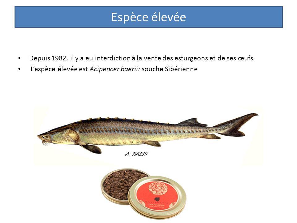 Depuis 1982, il y a eu interdiction à la vente des esturgeons et de ses œufs.