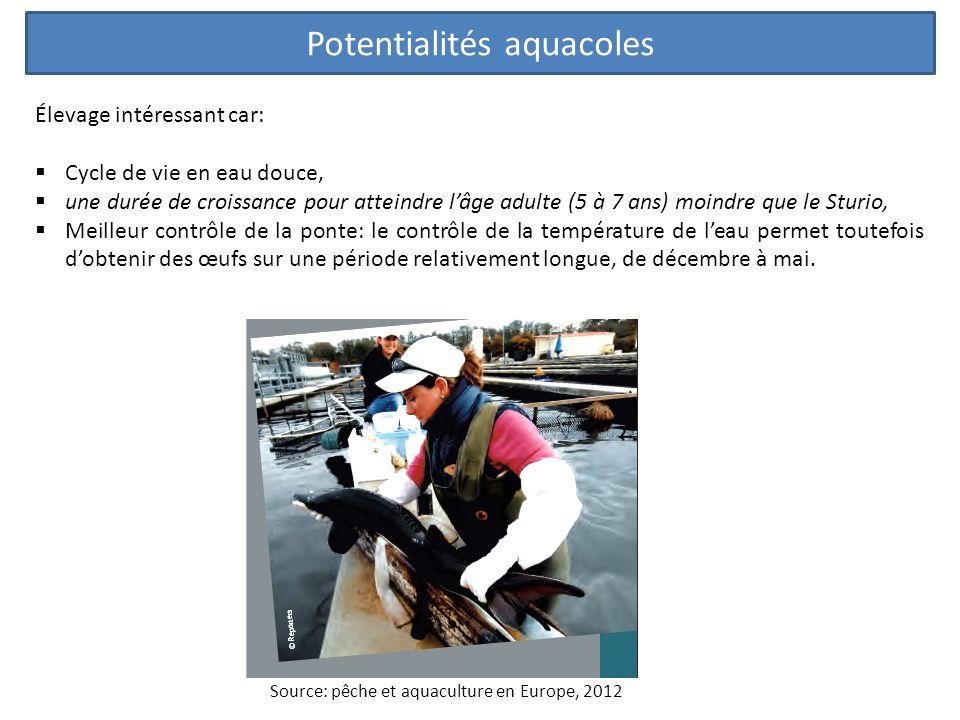 Potentialités aquacoles Élevage intéressant car: Cycle de vie en eau douce, une durée de croissance pour atteindre lâge adulte (5 à 7 ans) moindre que