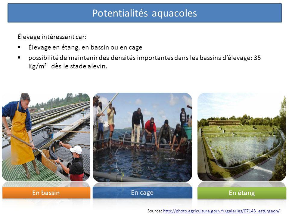 Élevage intéressant car: Élevage en étang, en bassin ou en cage possibilité de maintenir des densités importantes dans les bassins délevage: 35 Kg/m 2