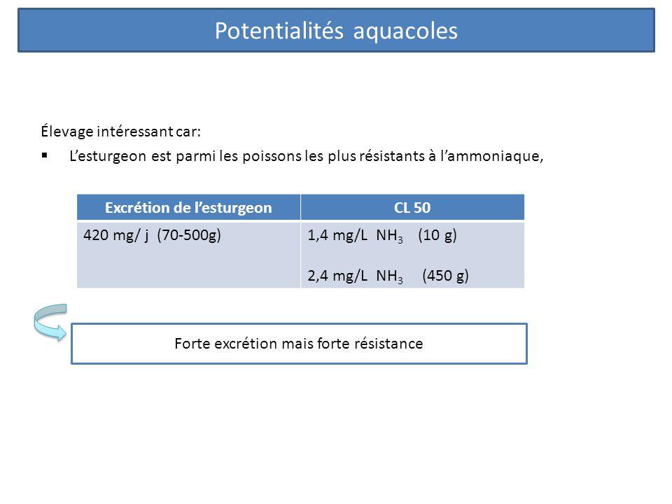 Élevage intéressant car: Lesturgeon est parmi les poissons les plus résistants à lammoniaque, Excrétion de lesturgeonCL 50 420 mg/ j (70-500g)1,4 mg/L