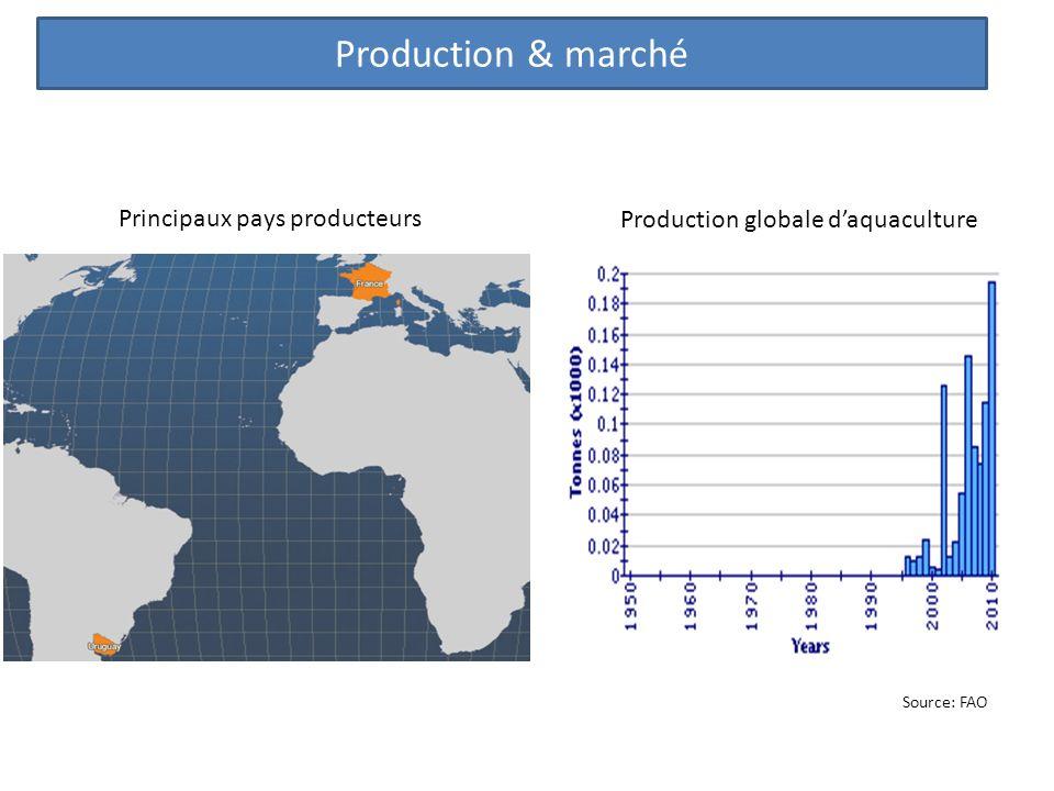 Production & marché Principaux pays producteurs Production globale daquaculture Source: FAO