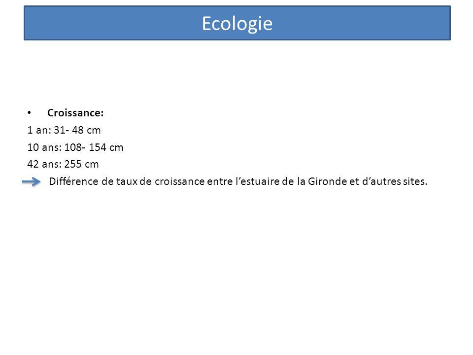 Croissance: 1 an: 31- 48 cm 10 ans: 108- 154 cm 42 ans: 255 cm Différence de taux de croissance entre lestuaire de la Gironde et dautres sites. Ecolog