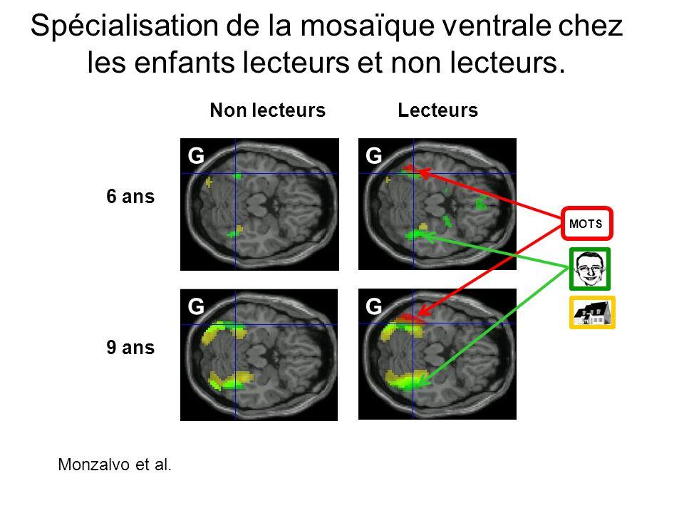 Spécialisation de la mosaïque ventrale chez les enfants lecteurs et non lecteurs. LecteursNon lecteurs 6 ans 9 ans MOTS G GG G Monzalvo et al.