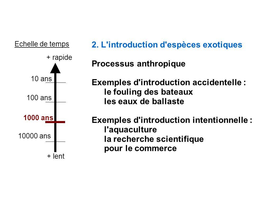 2. L'introduction d'espèces exotiques Processus anthropique Exemples d'introduction accidentelle : le fouling des bateaux les eaux de ballaste Exemple