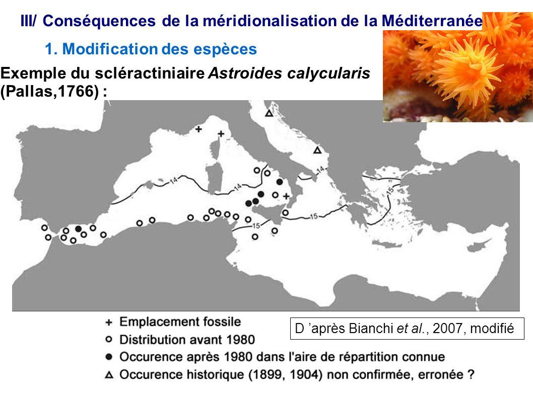 Exemple du scléractiniaire Astroides calycularis (Pallas,1766) : 1. Modification des espèces III/ Conséquences de la méridionalisation de la Méditerra