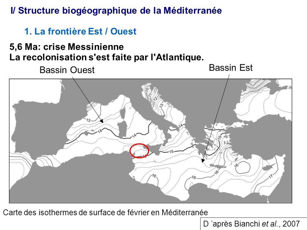 I/ Structure biogéographique de la Méditerranée 1. La frontière Est / Ouest Bassin Est Bassin Ouest 5,6 Ma: crise Messinienne La recolonisation s'est