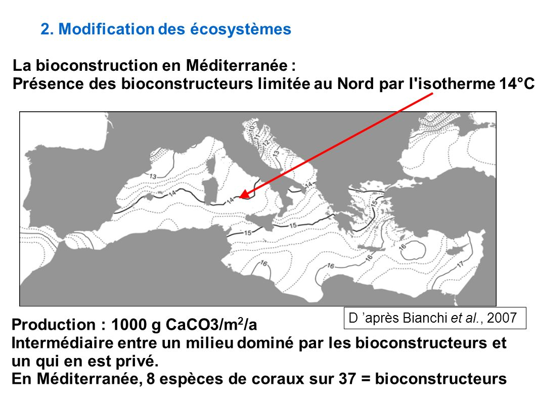 2. Modification des écosystèmes La bioconstruction en Méditerranée : Présence des bioconstructeurs limitée au Nord par l'isotherme 14°C Production : 1