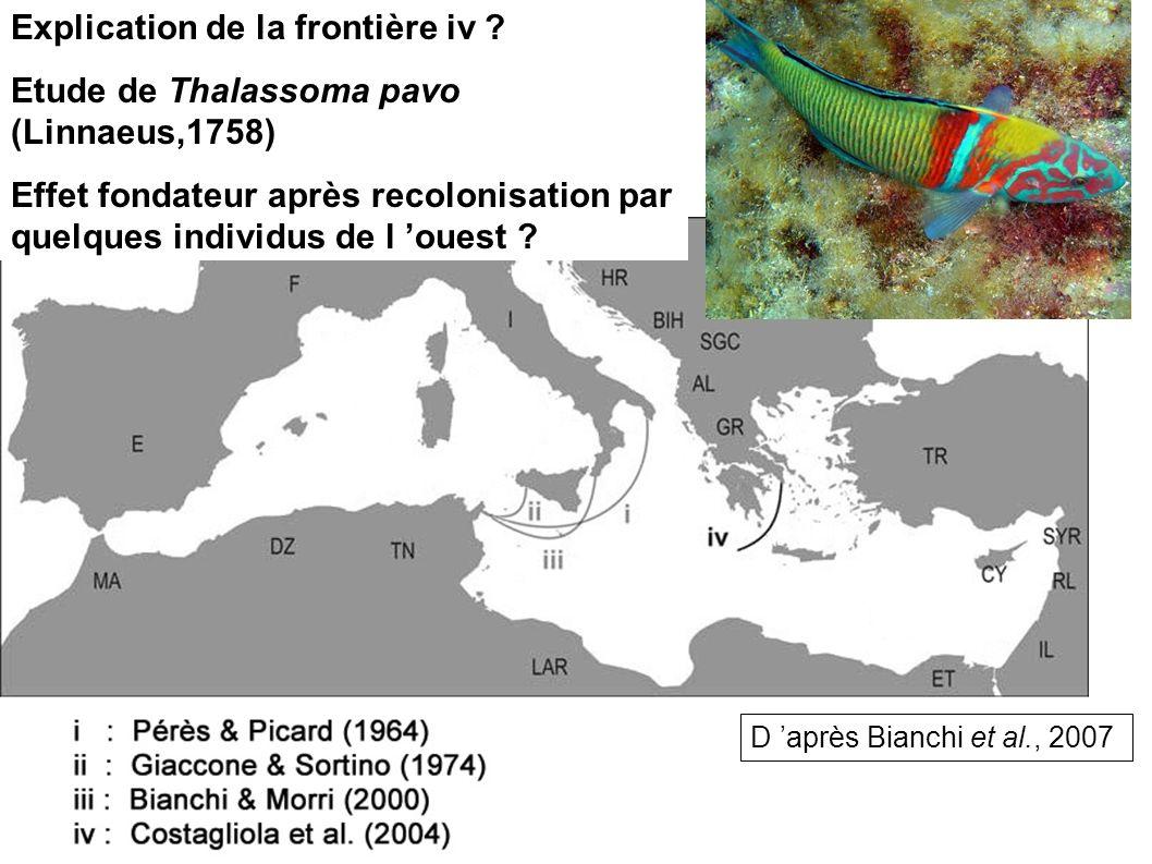 D après Bianchi et al., 2007 Explication de la frontière iv ? Etude de Thalassoma pavo (Linnaeus,1758) Effet fondateur après recolonisation par quelqu