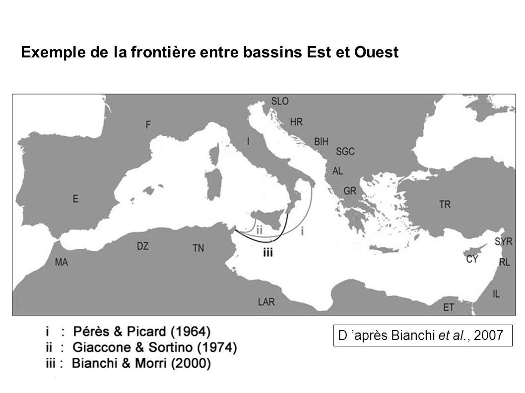 Installation inattendue en mer Adriatique Exemple du scléractiniaire A.
