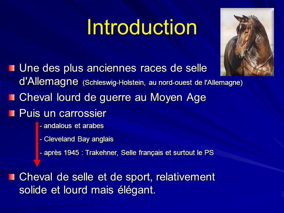 Introduction Une des plus anciennes races de selle d'Allemagne (Schleswig-Holstein, au nord-ouest de l'Allemagne) Cheval lourd de guerre au Moyen Age