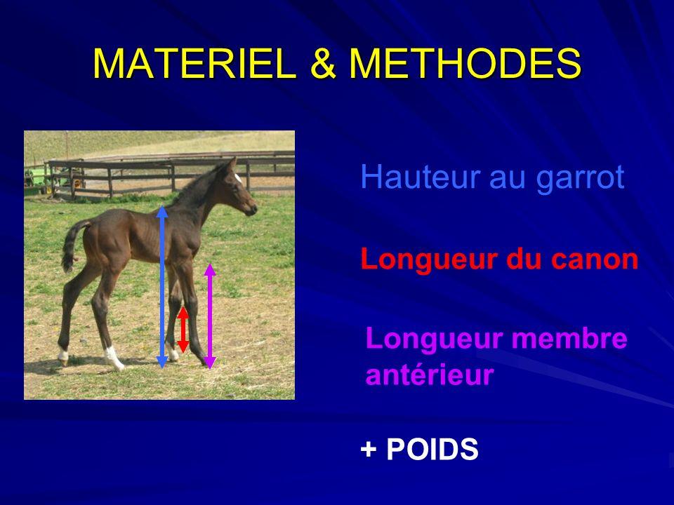 MATERIEL & METHODES Hauteur au garrot Longueur du canon Longueur membre antérieur + POIDS
