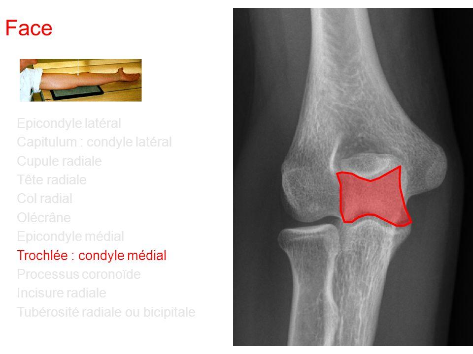 Face Epicondyle latéral Capitulum : condyle latéral Cupule radiale Tête radiale Col radial Olécrâne Epicondyle médial Trochlée : condyle médial Processus coronoïde Incisure radiale Tubérosité radiale ou bicipitale