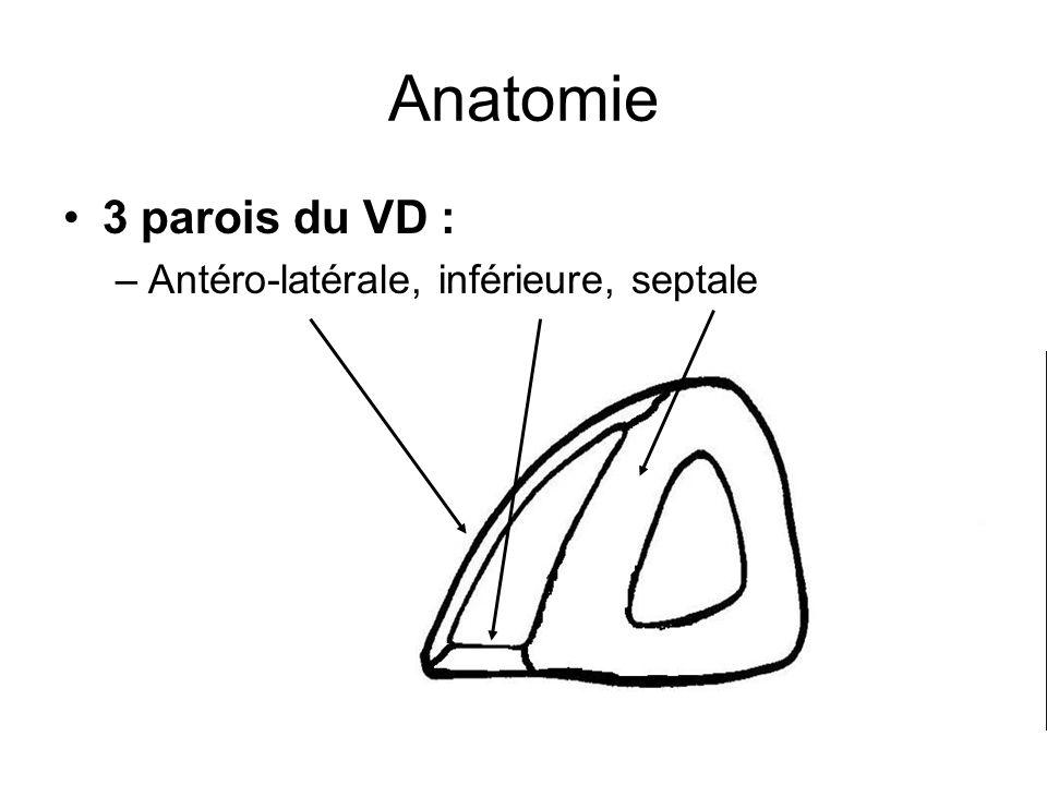 Anatomie 3 parois du VD : –Antéro-latérale, inférieure, septale