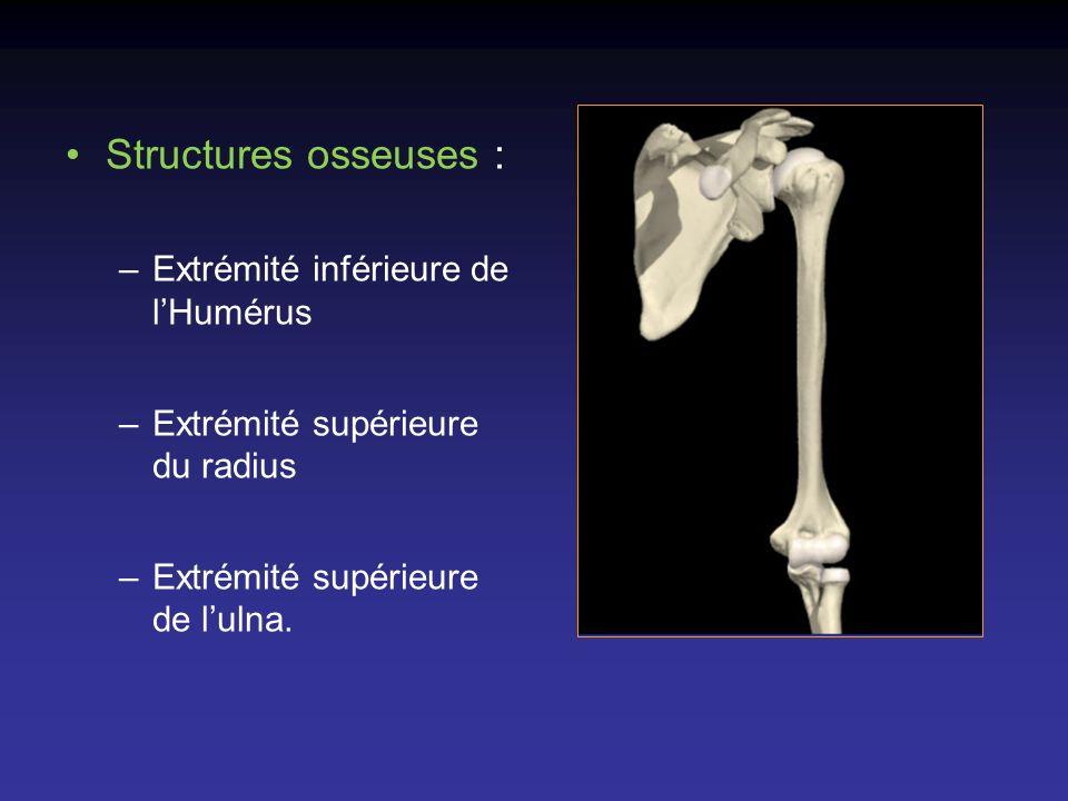 Structures osseuses : –Extrémité inférieure de lHumérus –Extrémité supérieure du radius –Extrémité supérieure de lulna.