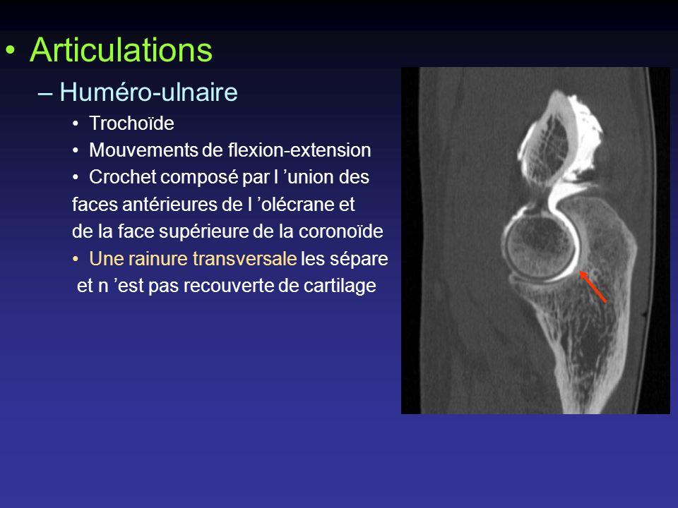 –Capitalo-radiale Enarthrose Mouvements de flexion-extension Condyle huméral = segment de sphère Une gouttière marque la limite entre condyle et épicondyle cupule radiale : cartilage plus mince au centre qu en périphérie