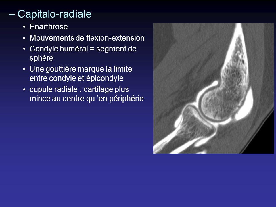–Capitalo-radiale Enarthrose Mouvements de flexion-extension Condyle huméral = segment de sphère Une gouttière marque la limite entre condyle et épico
