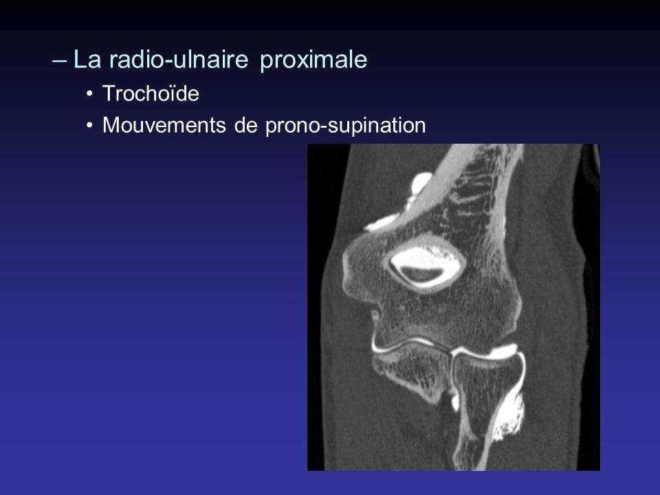 Fossettes para olécraniennes : –Nerf ulnaire (sub luxation, lésion intra nerveuse) –Olécrane, mouvement du tendon tricipital –Muscle Anconé