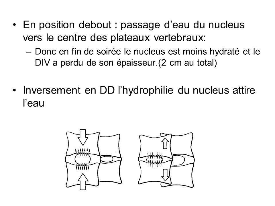En position debout : passage deau du nucleus vers le centre des plateaux vertebraux: –Donc en fin de soirée le nucleus est moins hydraté et le DIV a p