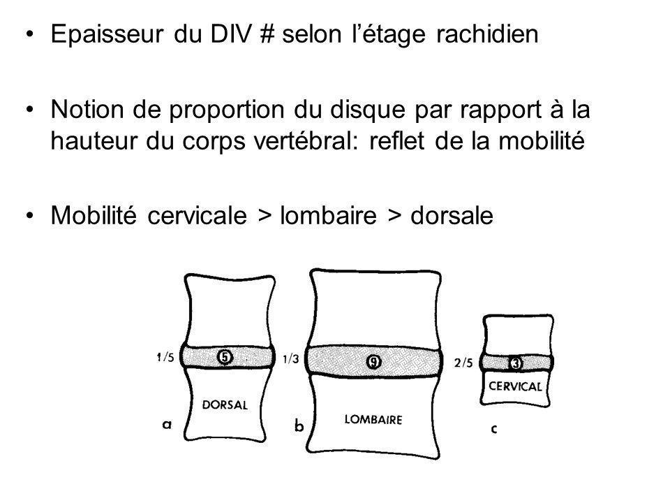 Epaisseur du DIV # selon létage rachidien Notion de proportion du disque par rapport à la hauteur du corps vertébral: reflet de la mobilité Mobilité c