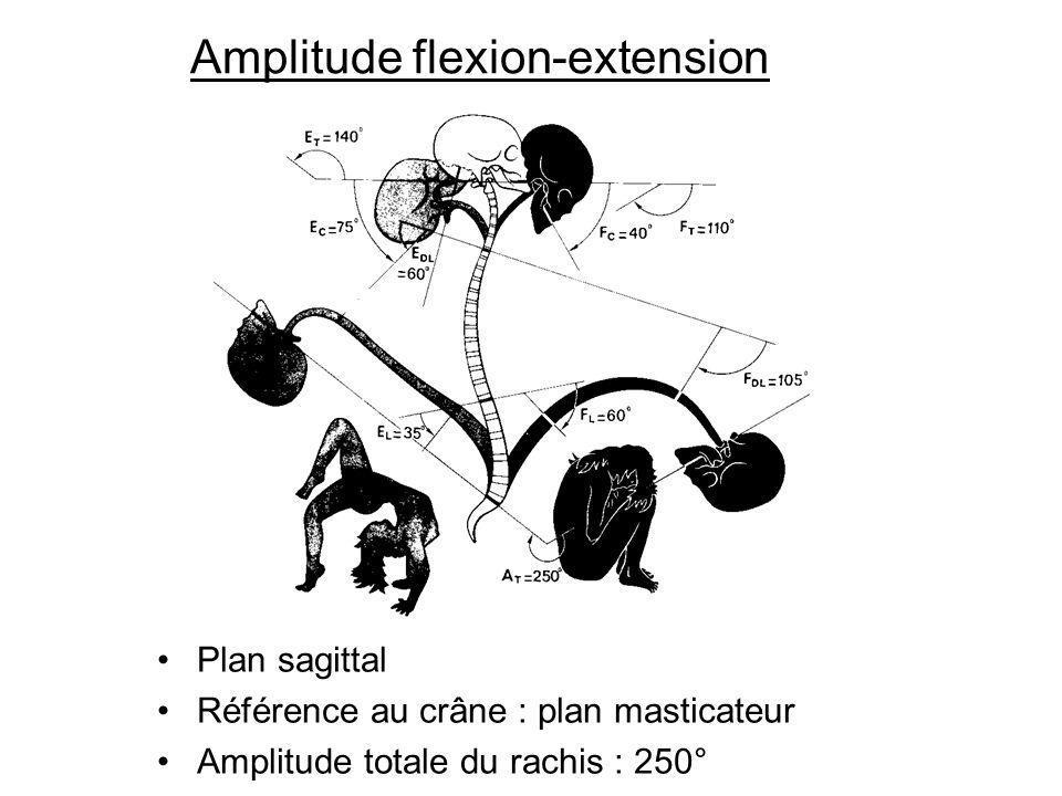 Amplitude flexion-extension Plan sagittal Référence au crâne : plan masticateur Amplitude totale du rachis : 250°