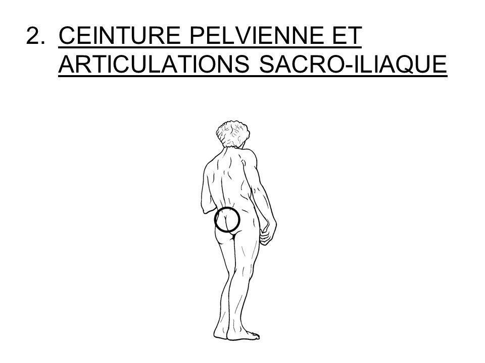 2.CEINTURE PELVIENNE ET ARTICULATIONS SACRO-ILIAQUE