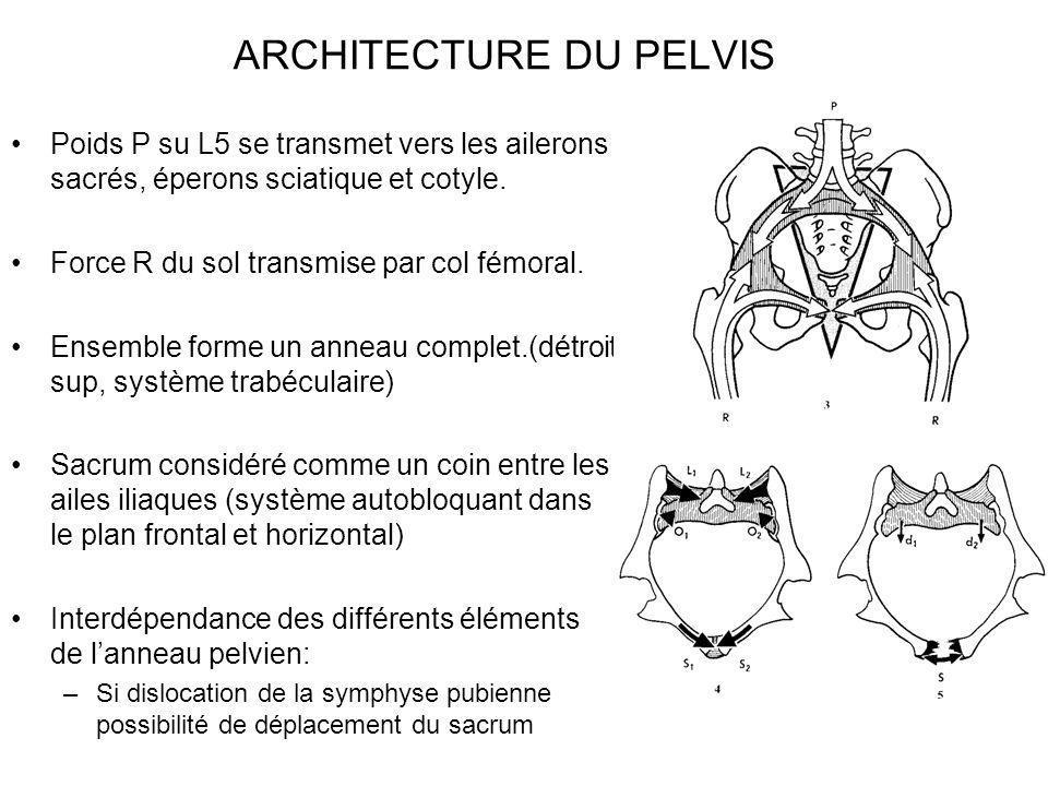 ARCHITECTURE DU PELVIS Poids P su L5 se transmet vers les ailerons sacrés, éperons sciatique et cotyle. Force R du sol transmise par col fémoral. Ense