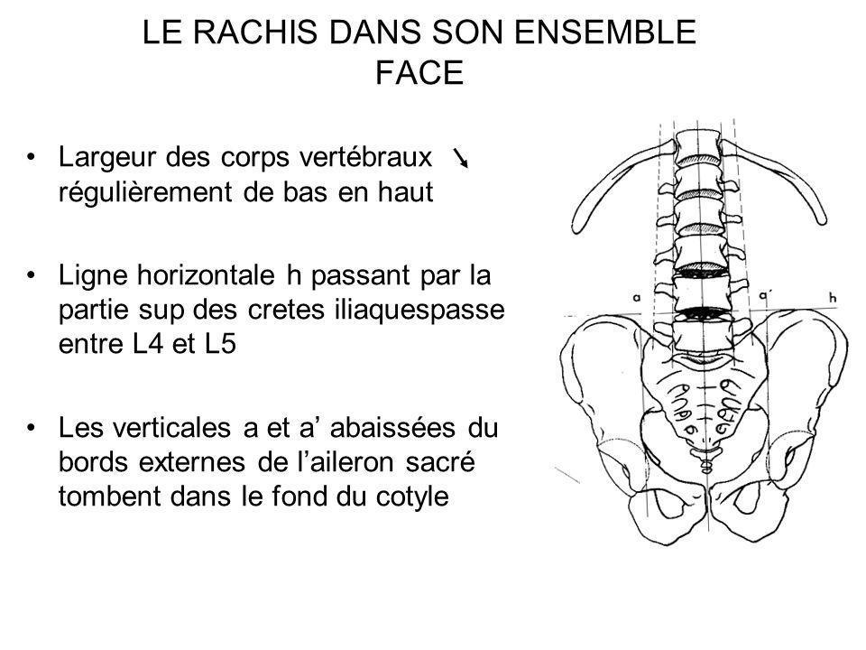 LE RACHIS DANS SON ENSEMBLE FACE Largeur des corps vertébraux régulièrement de bas en haut Ligne horizontale h passant par la partie sup des cretes il