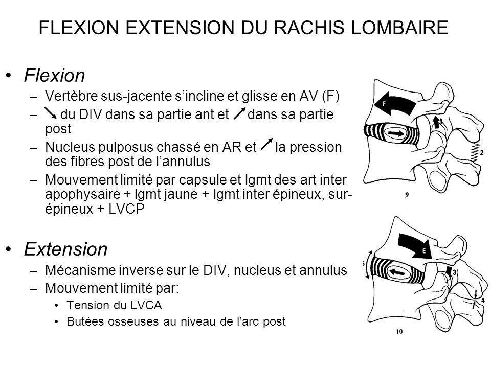 FLEXION EXTENSION DU RACHIS LOMBAIRE Flexion –Vertèbre sus-jacente sincline et glisse en AV (F) – du DIV dans sa partie ant et dans sa partie post –Nu