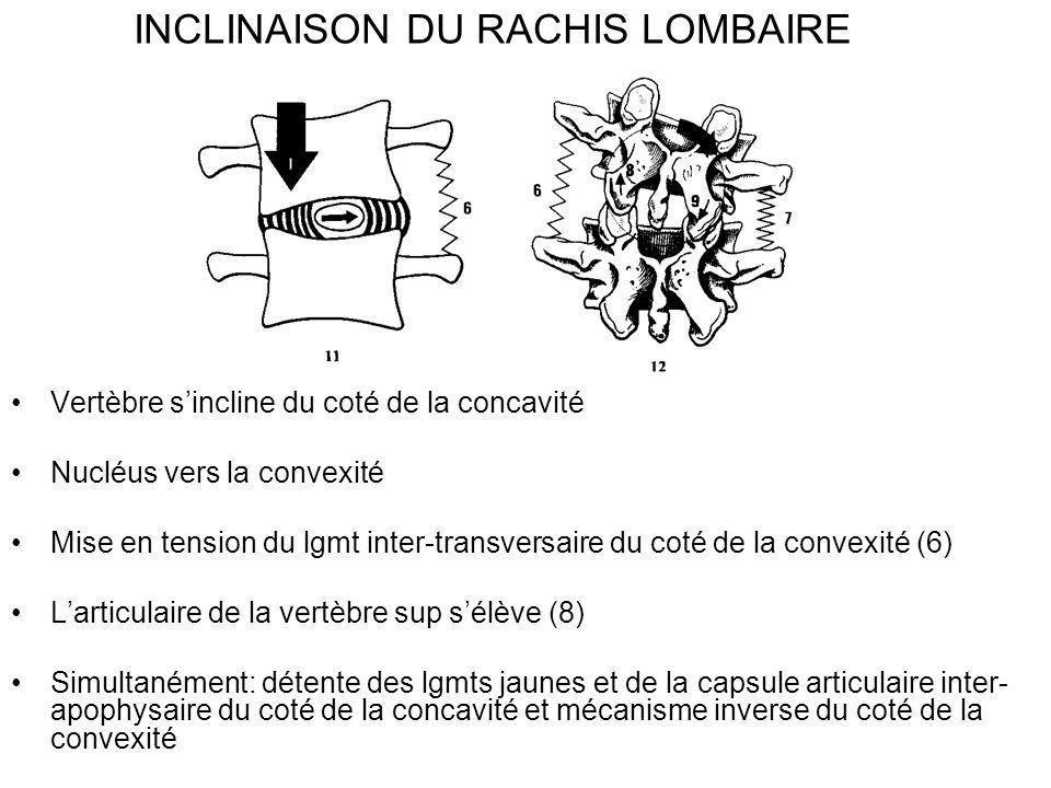 INCLINAISON DU RACHIS LOMBAIRE Vertèbre sincline du coté de la concavité Nucléus vers la convexité Mise en tension du lgmt inter-transversaire du coté