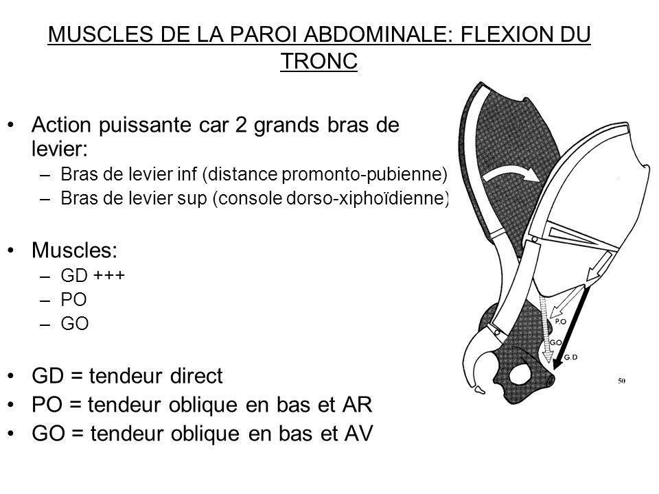 MUSCLES DE LA PAROI ABDOMINALE: FLEXION DU TRONC Action puissante car 2 grands bras de levier: –Bras de levier inf (distance promonto-pubienne) –Bras