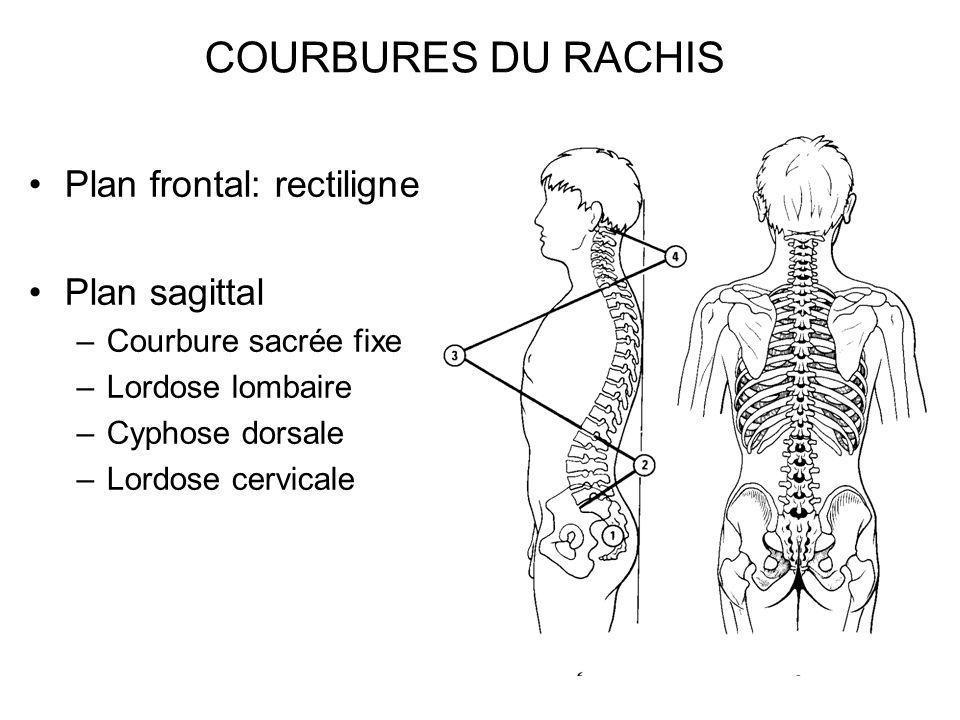 COURBURES DU RACHIS Plan frontal: rectiligne Plan sagittal –Courbure sacrée fixe –Lordose lombaire –Cyphose dorsale –Lordose cervicale